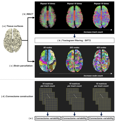 de040f7a3f20 Investigating the streamline count required for reproducible structural  connectome construction across a range of brain parcellation resolutions